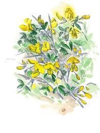 my wild garden refaella shir artist