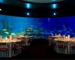 Wedding Venues Under 1000 28 Best I Love Aquariums Images On Pinterest Aquarium Wedding