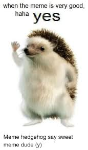 Hedgehog Meme - when the meme is very good haha yes meme hedgehog say sweet meme
