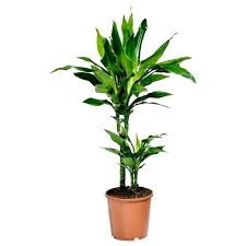 house plants safe for cats house plants toxic to cats uk