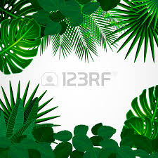 jungle leaves stock photos royalty free jungle leaves images