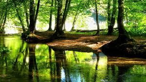forest backgrounds hd free download pixelstalk net