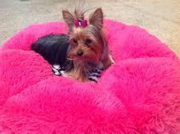 Cuddle Cup Dog Bed Designer Dog Beds Dog Boutique Panama City Beach Fl