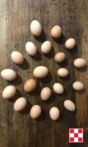 106 best eggs by breed images on pinterest chicken eggs keeping