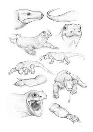 komodo dragon sketches by ki55ie on deviantart