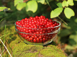 edible fruits autumn brilliance serviceberry 10 reasons to get one today