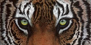 tiger painting focus