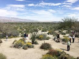 california deserts in u0027super bloom u0027 thanks to a wet winter 88 5 wfdd