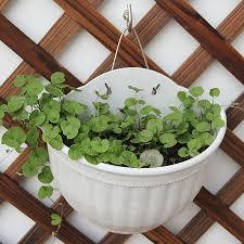 hanging planter basket pocketgarden plain color round plastic hanging planter flower pot