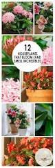 best 20 indoor house plants ideas on pinterest low light
