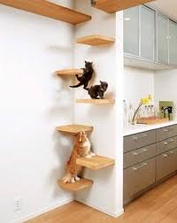 Wall Shelves For Cats 43 Best For The Cats Images On Pinterest Cat Stuff Cats And Cat