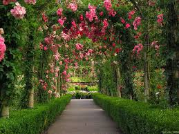 beautiful rose garden wallpaper gallery free wallpaper flowers