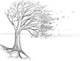 How To Draw Landscapes by How To Draw A Tree Tutorial Disegnare Pinterest Tutorials