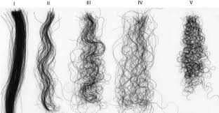 Hair Types by Images Of Various Types Of Hair Illustrating Their Diversity In