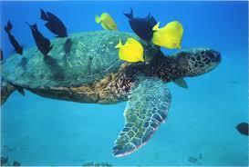 the sleeping habits of sea turtles