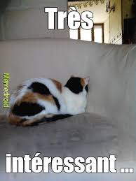 Chat Meme - mdr interessant c est mon chat meme by nico 60 memedroid