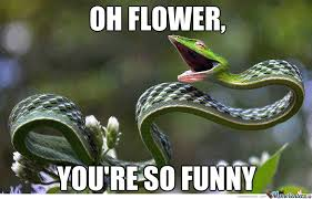 Meme Florist - the flower is funny by gvponce meme center