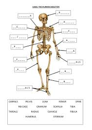 Anatomy And Physiology Labeling Label The Human Skeleton By 20008496 Teaching Resources Tes