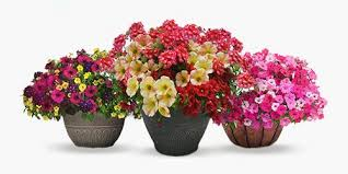 shop plants flowers at homedepot ca the home depot canada