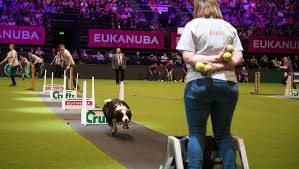 boxer dog crufts 2015 everything you ever wanted to know about the crufts dog show and