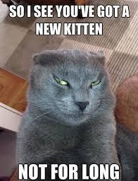 Talking Cat Meme - funny cat memes funny devious cat meme jokes 2014 jpg cat memes
