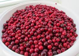 foods at the first thanksgiving cranberries and my first thanksgiving in inuvik top of the world