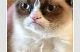 Grump Cat Meme Generator - grumpy cat meme generator mobile9 cute wallpaper litle pups