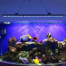 led aquarium lights for reef tanks best led strip lights for reef tank http ppau info pinterest