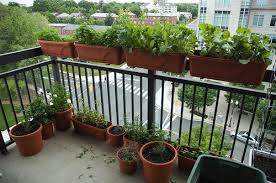 Balcony Garden by Eat Live Grow Paleo Yes You Can Have A Beautiful Balcony Garden