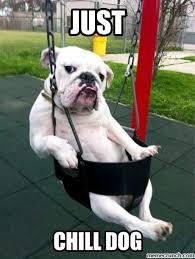 Chill Meme - chill dog