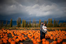 pumpkin patch maternity sauvie island pumpkin patch shannon