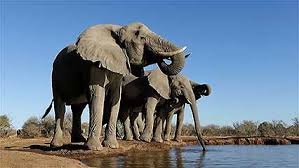 Diseases In Plants And Animals - botswana history geography britannica com