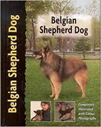 belgian shepherd uk belgian shepherd pet love amazon co uk robert pollet