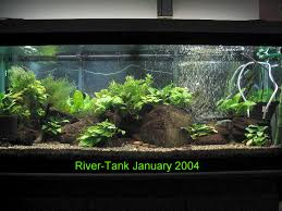 Asian Themed Fish Tank Decorations Hillstream Loaches The Specialists At Life In The Fast Lane
