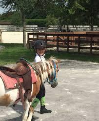 pony rides miami party pony rides miami equestrian club