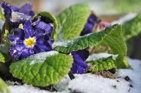 embrace winter essential gardening tips edition magazine