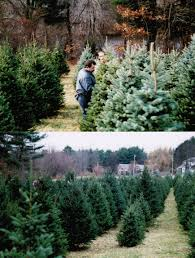 massachusetts christmas tree farms christmas lights decoration