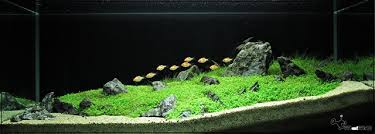 Aquascaping World Aquarium Background Black 1000 Aquarium Ideas 1000 Aquarium