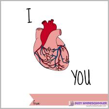 stem saturday free printable human heart fact valentines suzy