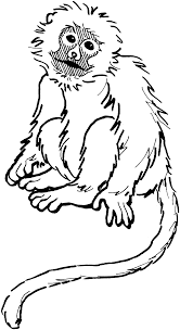 monkey black and white pics of monkey clip art coloring pages