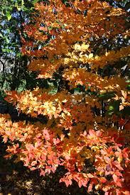 fall color uri botanical gardens blog