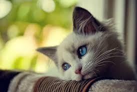 Cat Meme Maker - first world problems cat meme generator imgflip