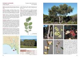 native plants south australia eucalypts of south australia