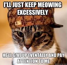 Pay Attention To Me Meme - i ll just keep meowing excessively he ll give up eventally and pay