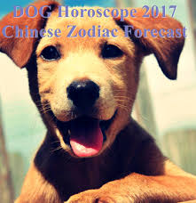 2017 dog predictions for love and money dog horoscope 2017