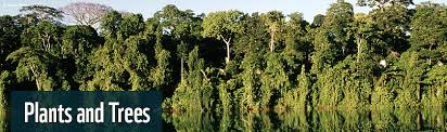 Plants In The Tropical Rain Forest - amazon plants and trees wwf