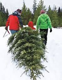 176 best christmas tree farm images on pinterest christmas