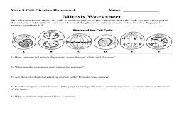 mitosis worksheet u2013 guillermotull com