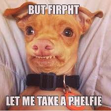 Meme Dog - firpht dog meme