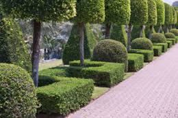 ornamental trees for landscaping